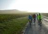 traversée entre les vignes Champenoises
